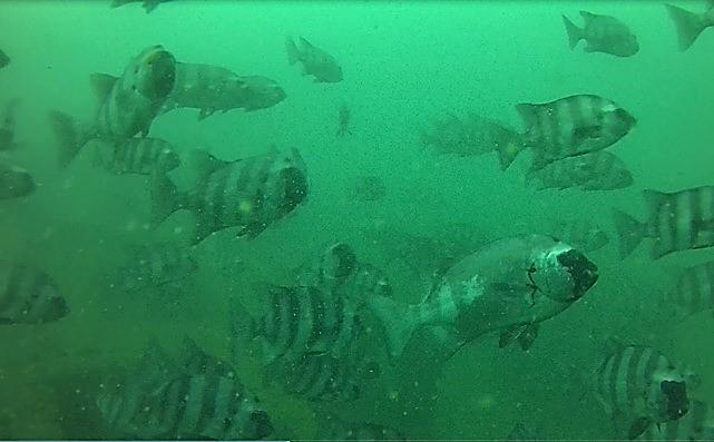 広島観音マリーナYoutube公式サイト 水中ドローンを使って撮影した映像がおススメです。